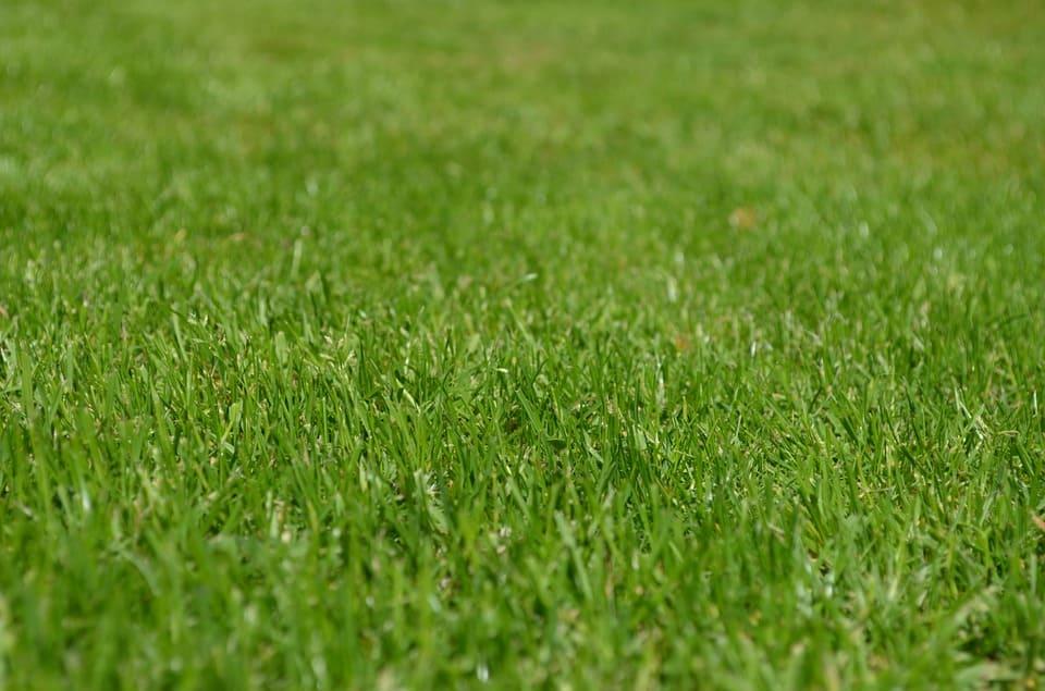 Ta hand om din gräsmatta – handfasta tips